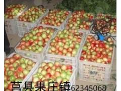 莒县果庄油桃水果