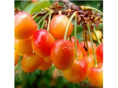 批发给种类型水果